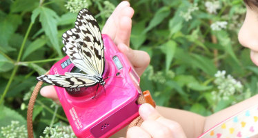 Butterfly on a camera at Taipei City Zoo